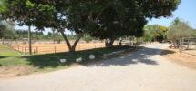 Domaine avec Haras (Ouest Netanya) – 38.000 m²